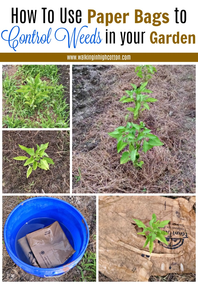Chemical Free weed control in your garden
