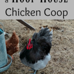 Pros and Cons of a Hoop House Chicken Coop