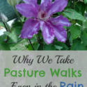 Why we take pasture walks--what we see, what we do, what we watch for... via Walking in High Cotton