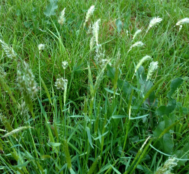 pasture walk 001