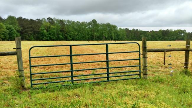 pasture walk 006