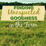 Finding Unexpected Goodness on the Farm