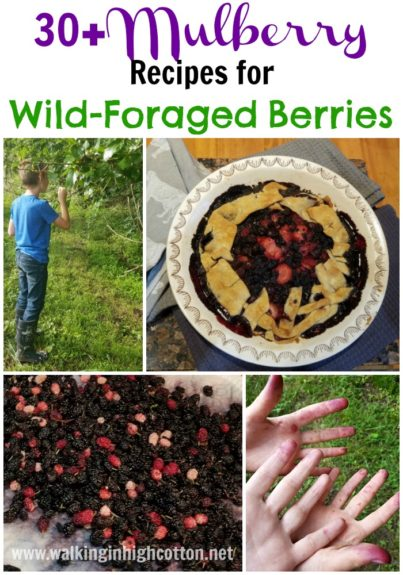 30+ Mulberry Recipes for wild-foraged berries. via Walking in High Cotton --tarts, pies, cheesecake, crumbles, cobblers, lemonade--all in one place!